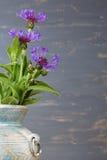 Cornflower (centaurea cyanus) in the blue vase over the blue background. Royalty Free Stock Photos