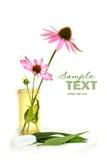 Cornflower del Echinacea en envase de la prescripción Foto de archivo libre de regalías