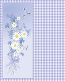 Cornflower do verão Fotos de Stock Royalty Free