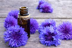 Cornflower essential oil. Cornflower flowers stock images