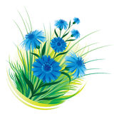 Cornflower and grass Royalty Free Stock Photos