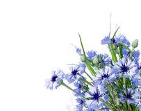 cornflower Het boeket van de bloem Wildflowerruikertje op wit wordt geïsoleerd dat stock foto's