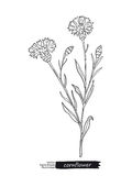 Cornflower isolated vector sketch Royalty Free Stock Images