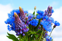 Cornflower and lupines bouquet. On sky background Stock Photos