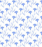 Cornflower. Pattern Royalty Free Stock Photos