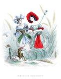 Cornflower and Poppy Stock Image