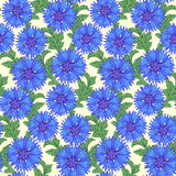Cornflower seamless pattern Royalty Free Stock Photo