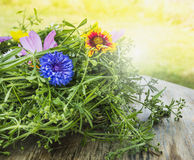 Cornflower and summer herb decoration Royalty Free Stock Images