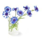 Cornflower in the vase Stock Photos