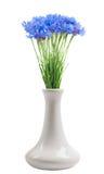 Cornflower in the vase Royalty Free Stock Image