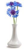 Cornflower in the vase Royalty Free Stock Photos