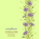 Cornflower  vector background Stock Images