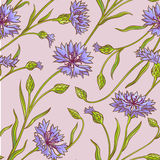 Cornflower  vector pattern Stock Photo
