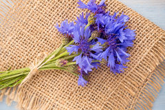 Cornflower. Royalty Free Stock Photo