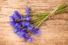 Cornflower. Stock Image