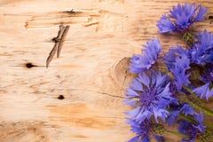 Cornflower. Stock Photo