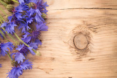 Cornflower. Royalty Free Stock Images