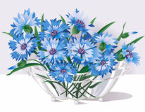 cornflowers διανυσματική απεικόνιση