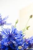 Cornflowers  Zdjęcie Stock