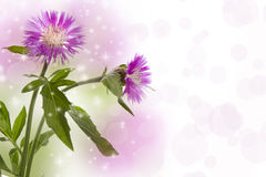 cornflowers Obrazy Royalty Free