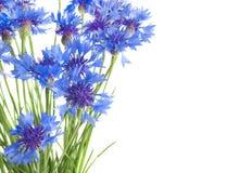 cornflowers Obraz Royalty Free