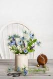 cornflowers stock afbeeldingen