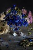 cornflowers Images libres de droits