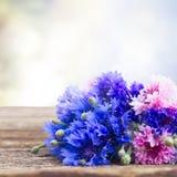 Cornflowers azuis Imagem de Stock