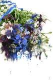 cornflowers bleus de bouquet Photos libres de droits