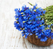 Cornflowers Stock Image