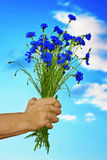 Cornflowers bouquet. Bouquet of flowers in hands royalty free stock image
