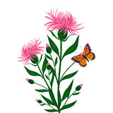Cornflowers and butterfly Vector Royalty Free Stock Photo