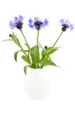 Cornflowers in the ceramic vase Stock Images