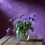 Cornflowers. Country summer Still life with cornflowers Stock Photography