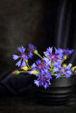 Cornflowers on a dark background Royalty Free Stock Image