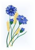 Cornflowers e frumento Fotografia Stock Libera da Diritti