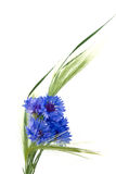Cornflowers and ears Stock Photos