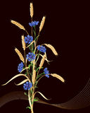 Cornflowers and ears of wheat bunch on black Stock Images