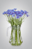 Cornflowers flowers in a jug Royalty Free Stock Images