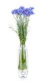 Cornflowers flowers in vase