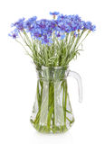 Cornflowers flowers in vase stock images