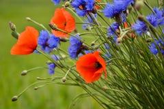 Cornflowers i maczki stoi out Obrazy Stock