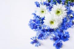 Cornflowers i stokrotka bukiet Zdjęcia Stock