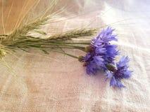 Cornflowers, jęczmienni ucho na bieliźnianym płótnie Obraz Royalty Free