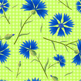 Cornflowers on a light Green Background. Blue cornflowers on a light green background with polka dots. Summer seamless pattern. Vector illustration with flowers Royalty Free Stock Photography
