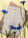 Cornflowers mit Segeltuch Stockfotos