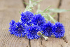 Cornflowers Royalty Free Stock Image