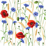 Cornflowers, Poppies and Wheat Ears Pattern. Seamless pattern with blue cornflowers, red poppies and wheat ears  on white Stock Photography