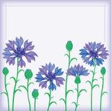 cornflowers rabatowy kwiat Zdjęcia Royalty Free