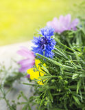 Cornflowers in summer wreath Royalty Free Stock Photography